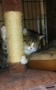 Shelter cat using scratching post